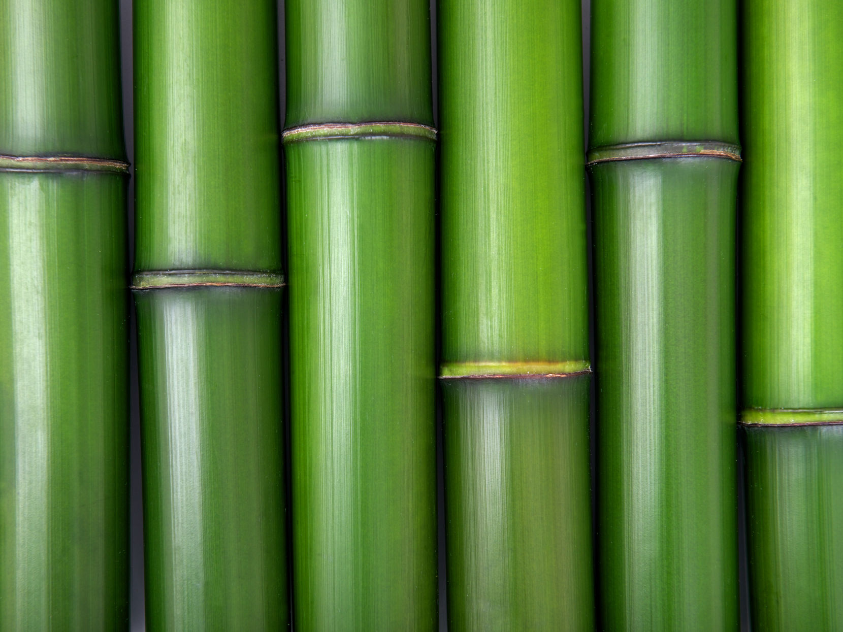 Phyllostachys Bambusoides Extract