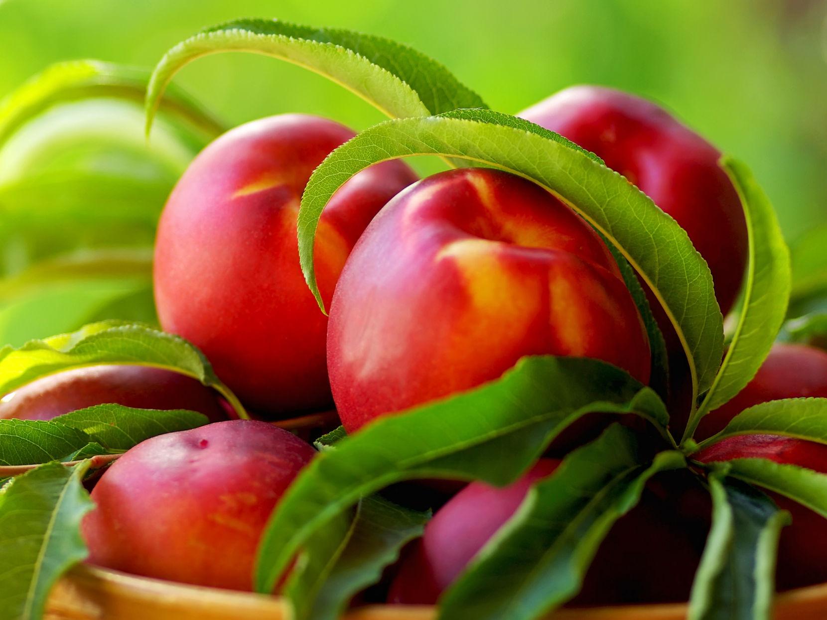 Prunus Cerasus Kernel Oil